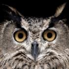 sroyle's profile image